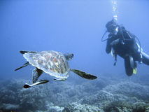 Green sea turtle and diver Stock Images