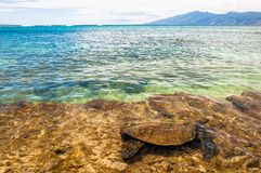 Green Sea Turtle in Ocean - Maui, Hawaii Royalty Free Stock Photos