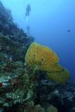 Green Sea Turtle, Sipadan Island, Sabah Stock Image