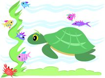Green Sea Turtle Stares at Marine Friends Royalty Free Stock Photography