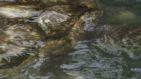 Sea turtle in the water close up shot stock video footage