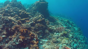 Green Sea turtle swims on a  Coral reef 4K. Green Sea turtle swims on a colorful coral reef. 4k footage stock video footage