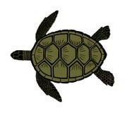 Green sea turtle vector. stock illustration
