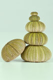 Green sea urchins stacked Stock Photos