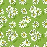 Green seamless daisy pattern. Royalty Free Stock Photography