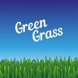Green seamless grass borders. Pattern illustration for eco design. Nature wallpaper. Green seamless grass borders. Pattern grass illustration for eco design Stock Photo