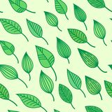 Green seamless pattens with leaves, vector summer and spring background, greenery wallpaper. Repeating motive Stock Image