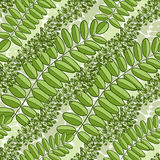 Green seamless pattern with acacia leaves. Spring Vector background for packaging, textile and fabric design Stock Photography