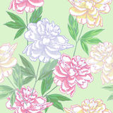Green Seamless pattern  with peonies Royalty Free Stock Photography