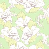 Green Seamless pattern  with white amaryllises Stock Photos