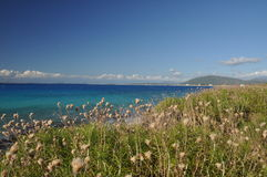 Green seashore. A peaceful, green, summer seashore Stock Photography