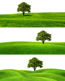 Green season Royalty Free Stock Photo