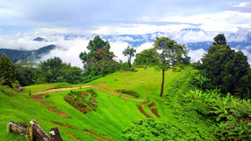 Green season in chiangmai Royalty Free Stock Image