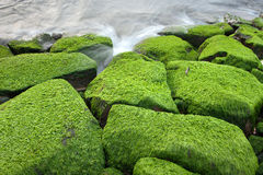Green seaweed Stock Photography