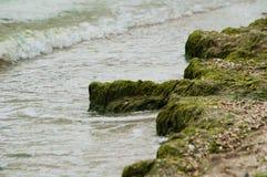 Green Seaweed on beach Royalty Free Stock Image