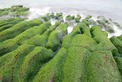 Green seaweed coastline. Royalty Free Stock Photos