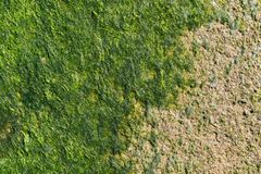 Green seaweed on a concrete surface Stock Images