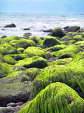 Green seaweed Stock Photo