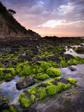 Green Seaweed on Rocks. Bright green seaweed growing on rocks at the beautiful Balcombe Point area in Mount Martha towards dusk stock photos