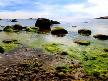 Green seaweed, rocks on a crystal clear blue ocean. Rocky beach seaweed green cloudy Stock Photos
