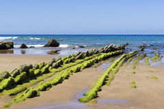 Green seaweed on rocky beach Stock Photos