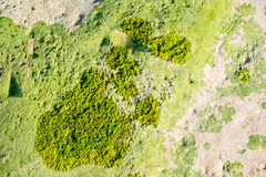 Green seaweed on sand on sea shore. Top view Stock Photos