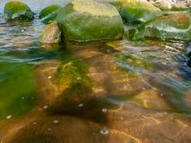 Green seaweed, sea pebbles royalty free stock photography