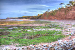 Green seaweed St Audries Bay beach Somerset England uk in colourful HDR. St Audries Bay coast and beach Somerset England uk near Watchet in colourful HDR Royalty Free Stock Photo
