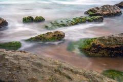 Green seaweed on stones, the sea coast Royalty Free Stock Photos