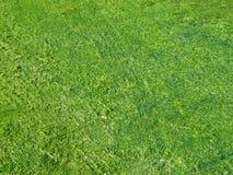 Green seaweed on waterline. Stock Photo