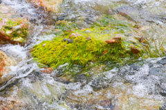 Green Seaweeds Stock Images
