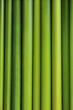 Green background same bamboo Stock Photos