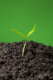 Green seedling Stock Image