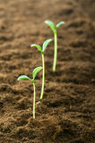 Green seedling. Illustrating concept of new life Royalty Free Stock Photos