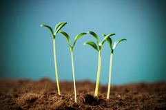 Green seedling Stock Photo
