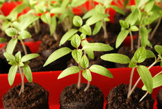 Green seedling Stock Photos