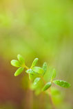 Green seedling Royalty Free Stock Photos