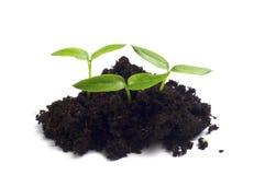 Green seedling Stock Photography