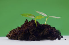 Green seedling Stock Images