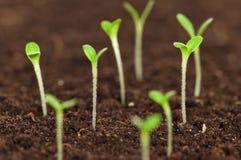 Green seedling Stock Photos