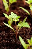 Green seedling Royalty Free Stock Photography