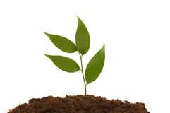 Green seedling. Illustrating the concept of new life Stock Image