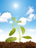 Green seedling Stock Photo