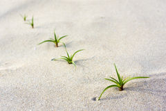 Green seedling on beach Stock Image