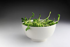 Green Seedling with Bowl Stock Photo