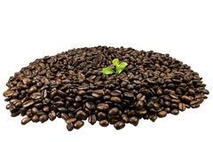 Green seedling in coffee beans isolated on white background Royalty Free Stock Photos