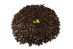 Green seedling in coffee beans isolated on white background Royalty Free Stock Image