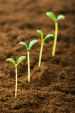 Green seedling - concept of new life Royalty Free Stock Photos