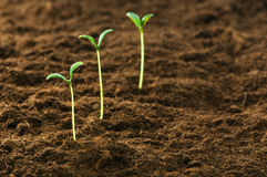 Green seedling - concept of new life Royalty Free Stock Photo