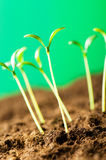 Green seedling - concept of new life Stock Images